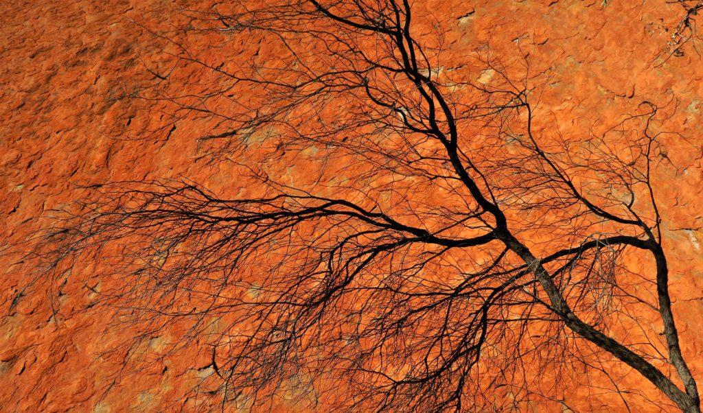 Ombre d'arbre désseché sur l'imposant monolithe.